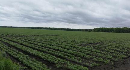 6月末多地大宗农产品作物生长期踏查(...